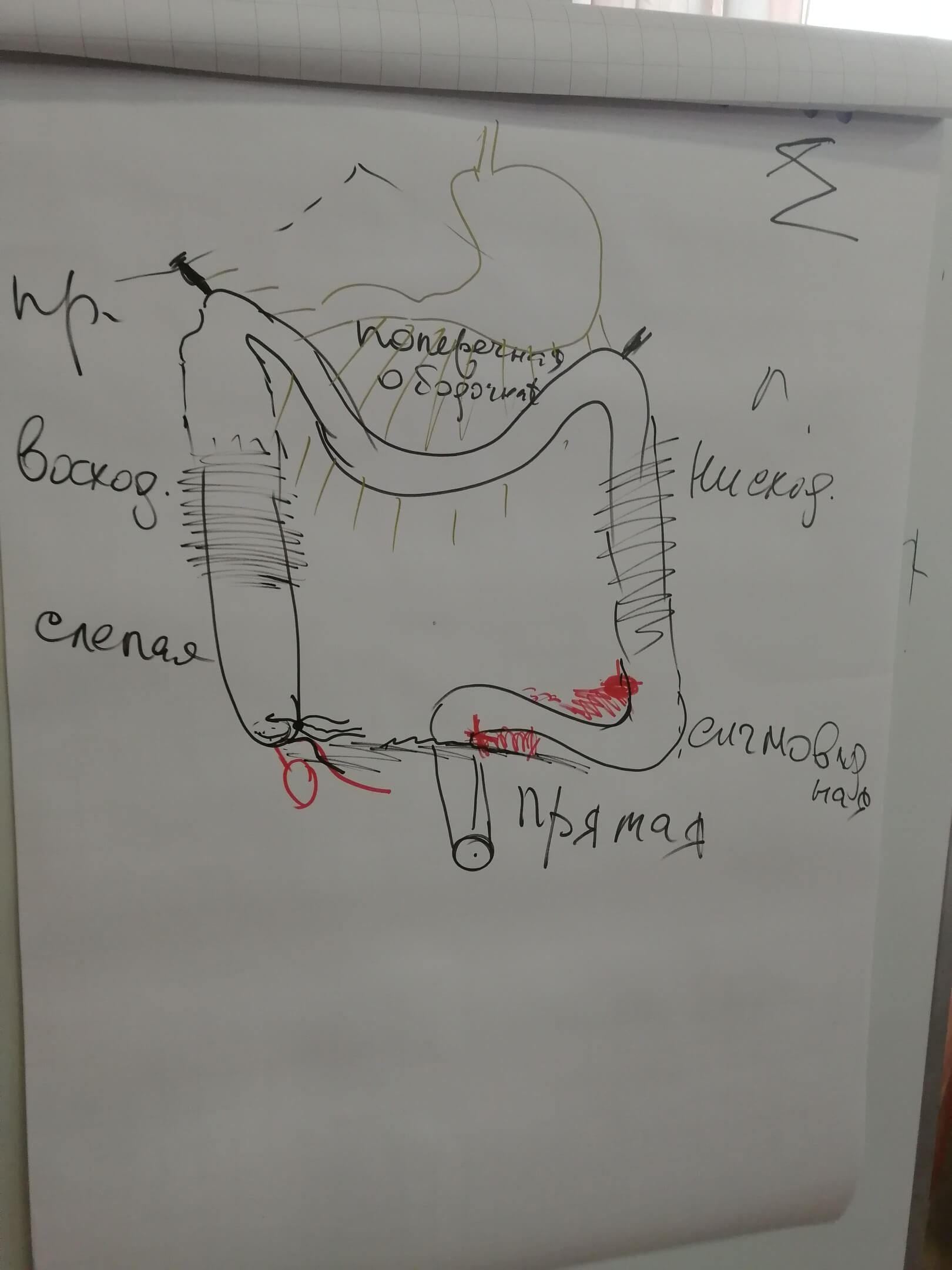 Психосоматика внутренних органов