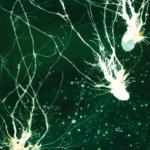 Карма мозга: обречены ли мы жить в иллюзии