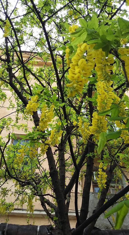 Весна в Новороссийске